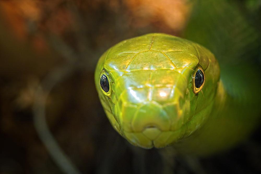 Snake-eye....