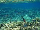 Snorkeling at Ile Coco
