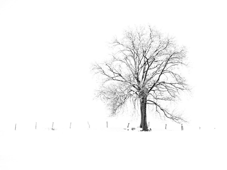 Snow Break Tree