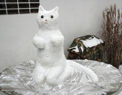 Snow Cat / Schneekatze