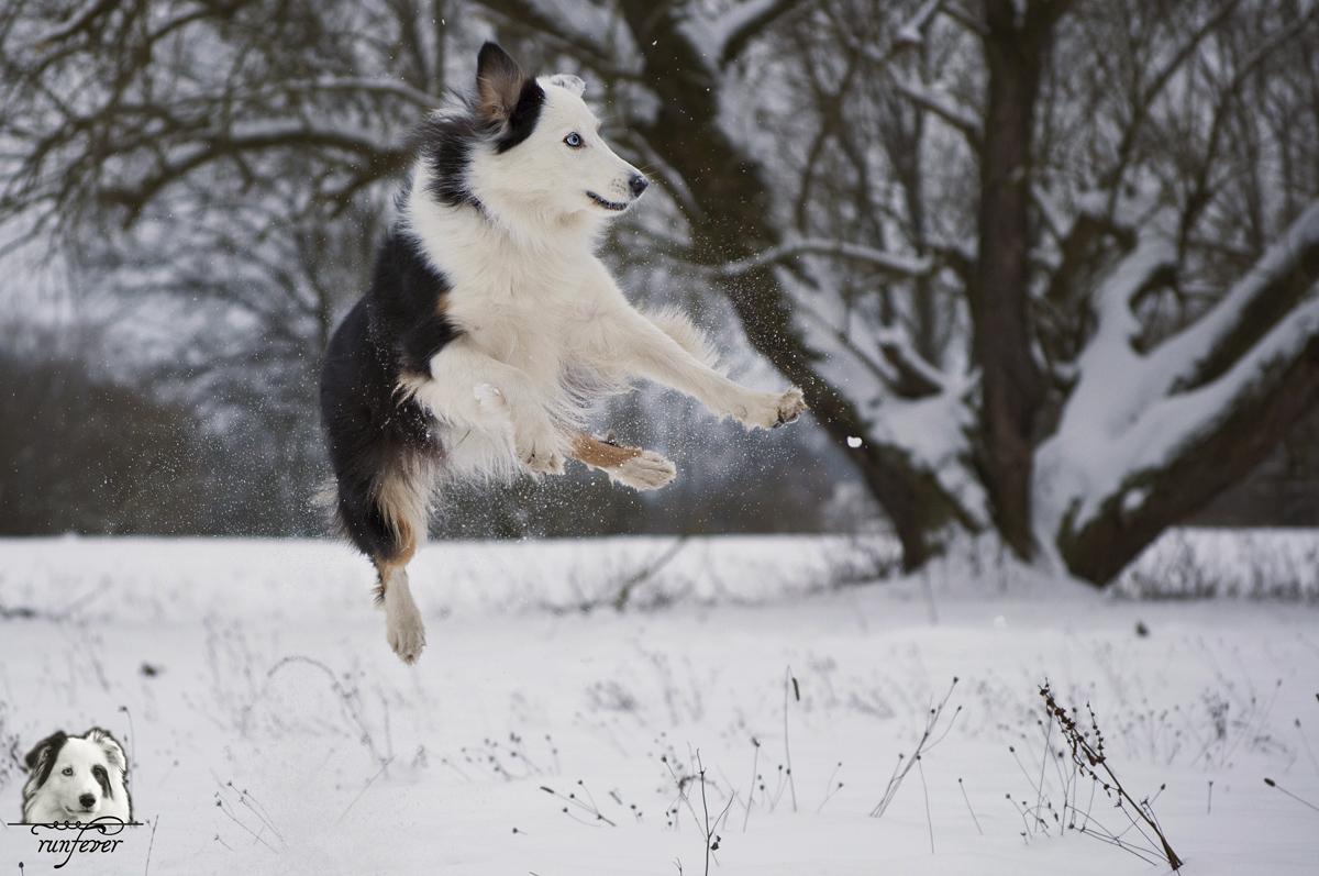 *Snow Catching*