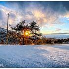 [snow I tree I sunset]