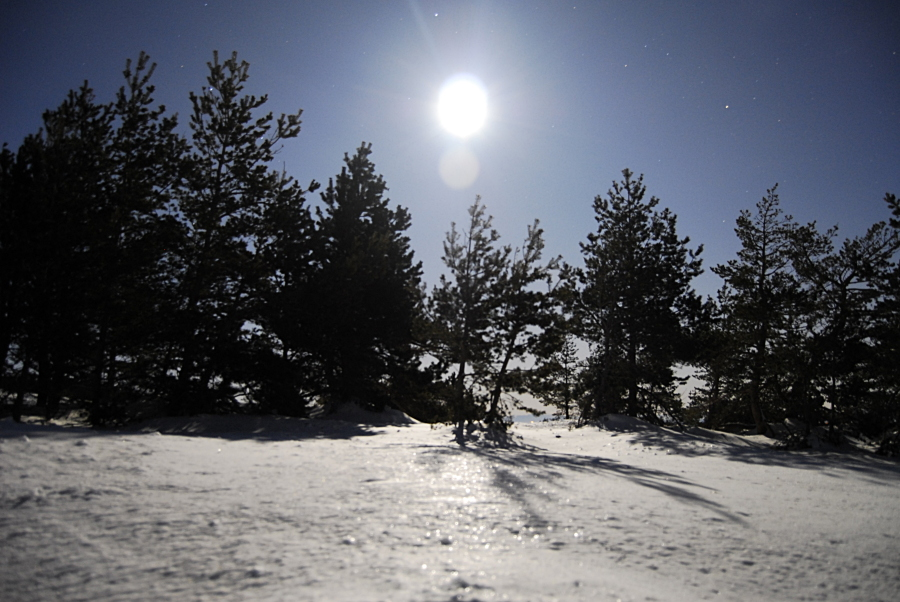 snow in moonlight