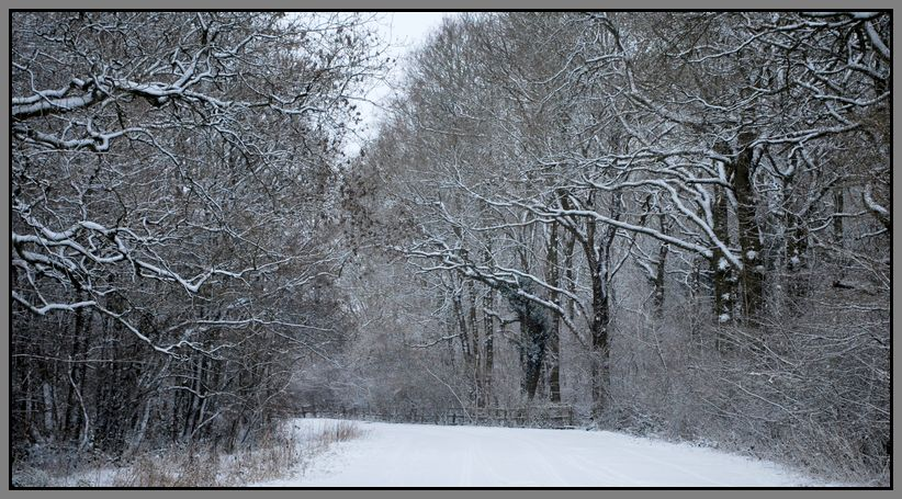 Snow in the Woods.