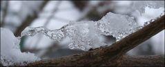 snow meets branch.