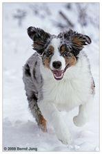 Snow-Merlin