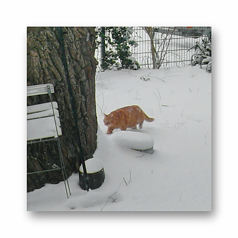 snow snow snow.. where ever you go there is snow (Baldrian has no idea where the snow came from)