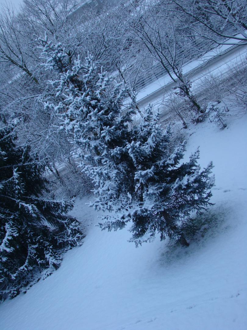snow tree II