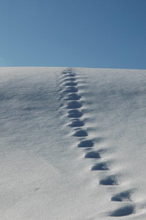Snow-way