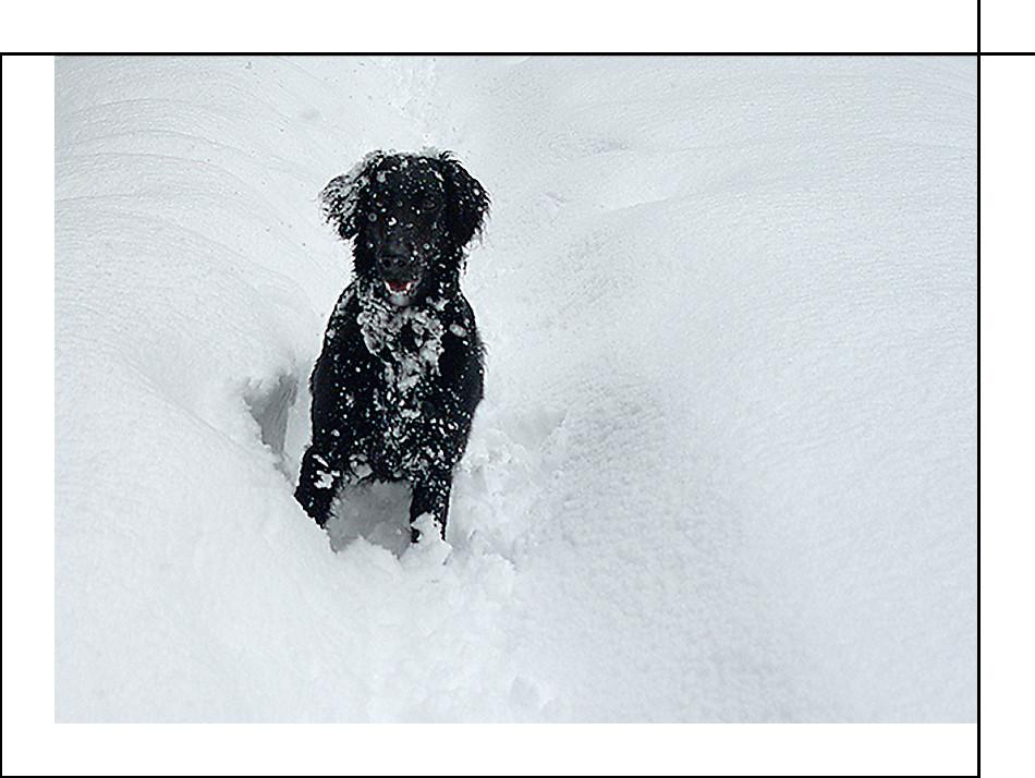 snowdog ?