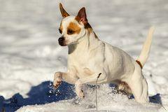 """Snowdog""..."