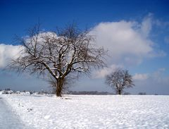 snowdream 4