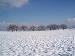 snowdream 5