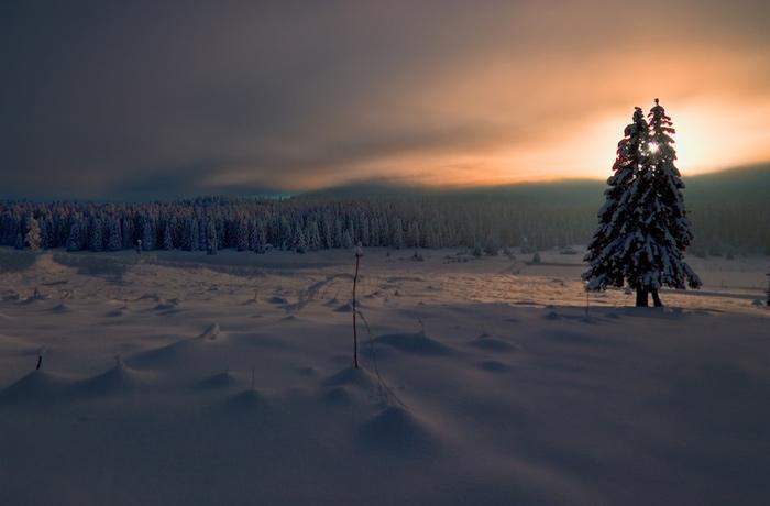 Snowscape #