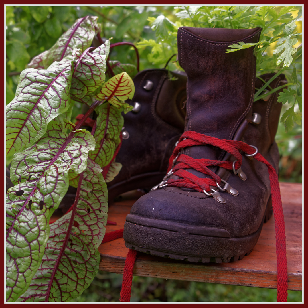 So betrachtet wird ein Schuh draus Foto & Bild | fotos