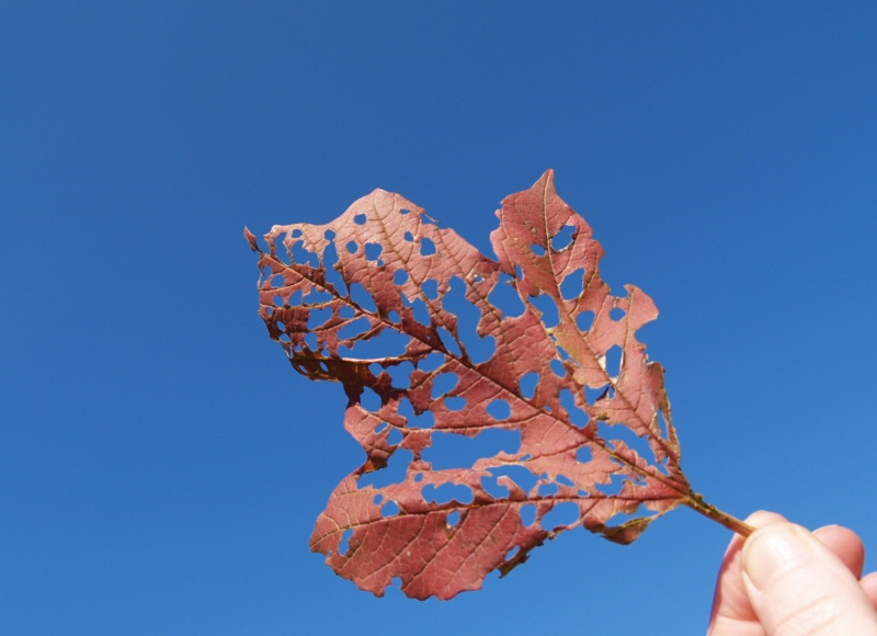 So blau ist der Himmel im Oktober