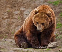 So böse braucht der Bär...