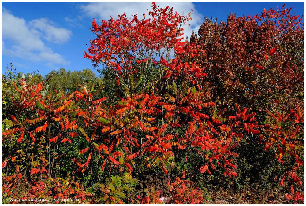 --- So bunt kann der Herbst sein ----