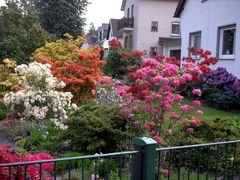 ... so bunt kann ein Garten sein !