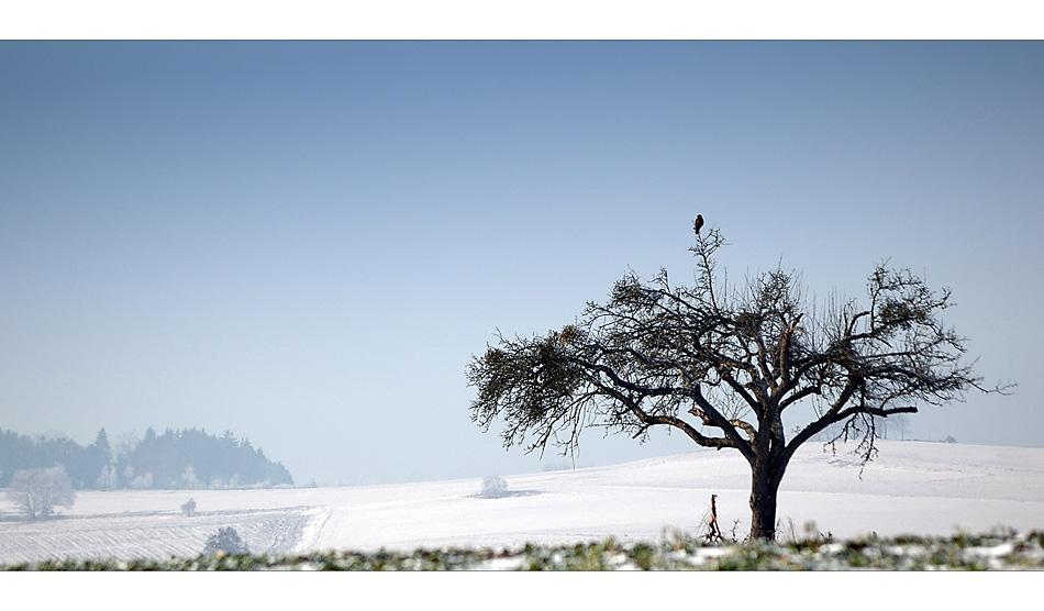 So ein Baum...