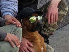 So ein cooler Hund!