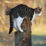 So ein Katzenfell im Rücken...