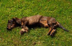 So ein Mittagsschläfchen im Trocknen ....