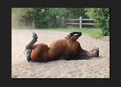 So ein Pferdeleben
