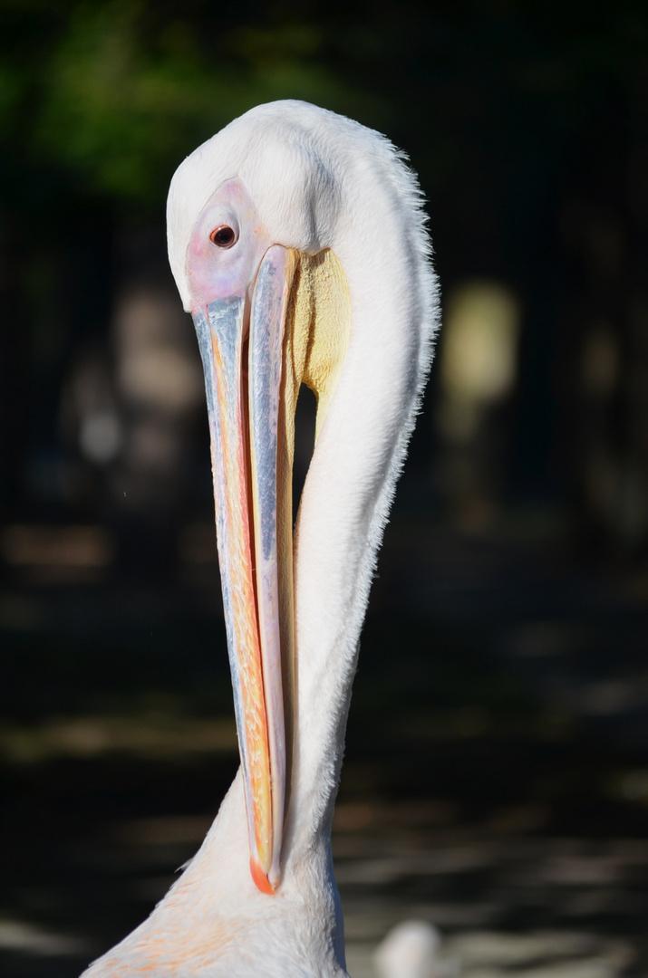 so ein Vogel
