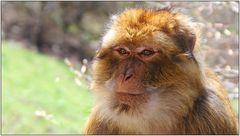 ... so eine Affenhitze ...