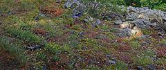 So eine herrliche Pflanzenstelle am steilen Hang eines Berges...