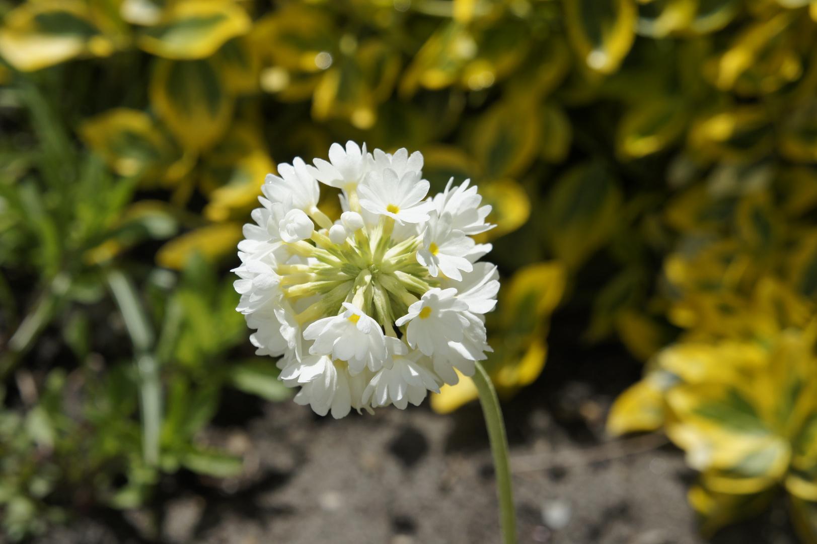 So eine schöne Blume :)