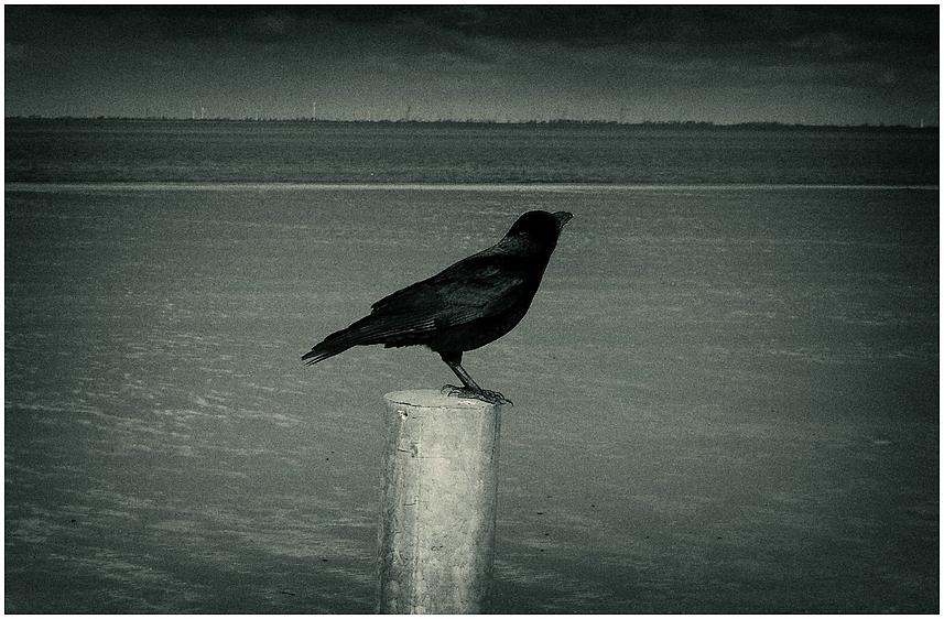 so flieg denn nun, du schwarzer vogel...