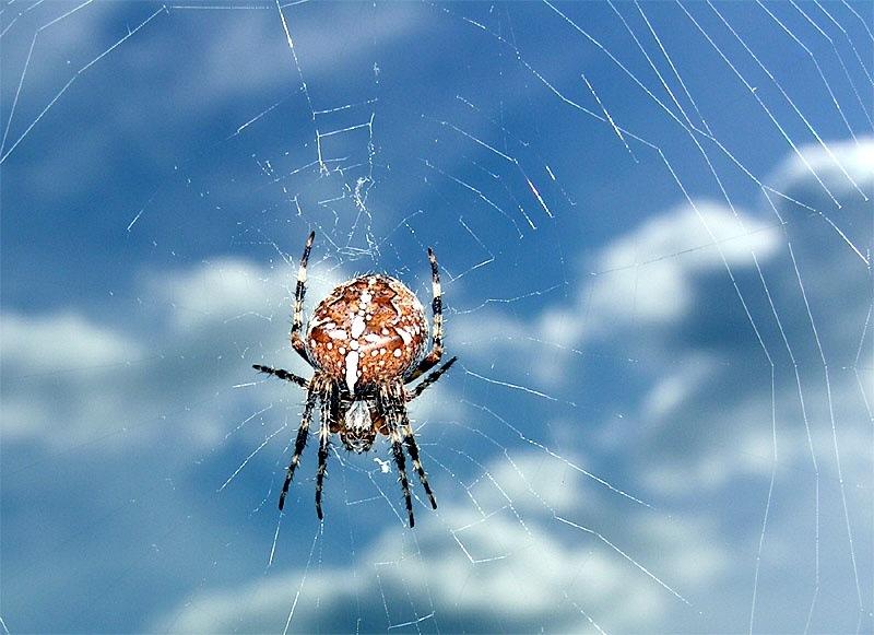 so frei wie eine Wolken-Spinne