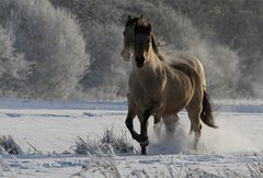 So ist Winter toll!!
