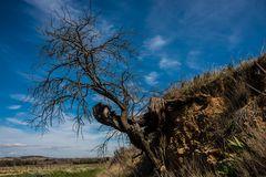 So kann der stärkste Baum nicht überleben