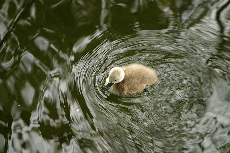 So klein und doch allein im kalten Wasser