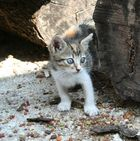So klein und so neugierig...