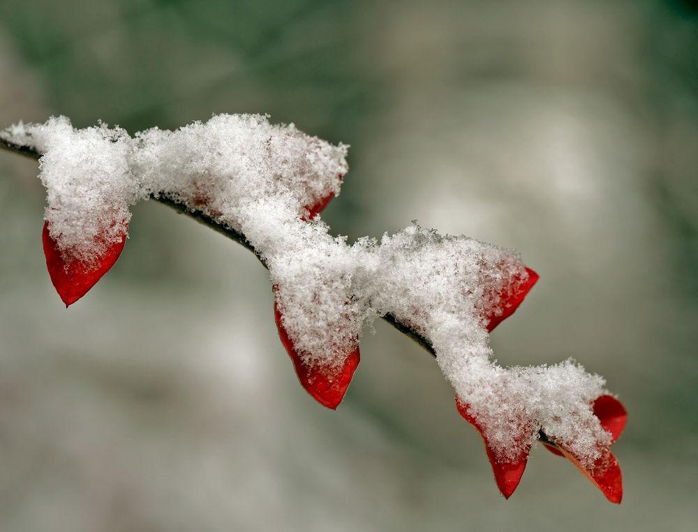 So langsam kommt der Winter… - L'automne et l'hiver en même temps...