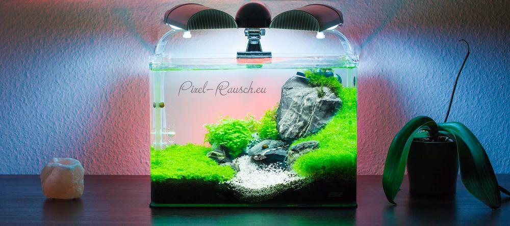 so langsam wird es doch mein garnelenaquarium foto bild tiere haustiere aquaristik. Black Bedroom Furniture Sets. Home Design Ideas