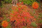 So leuchtend schön kann der Herbst sein