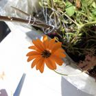 So orange.... :D