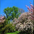 So schön ist der Frühling !