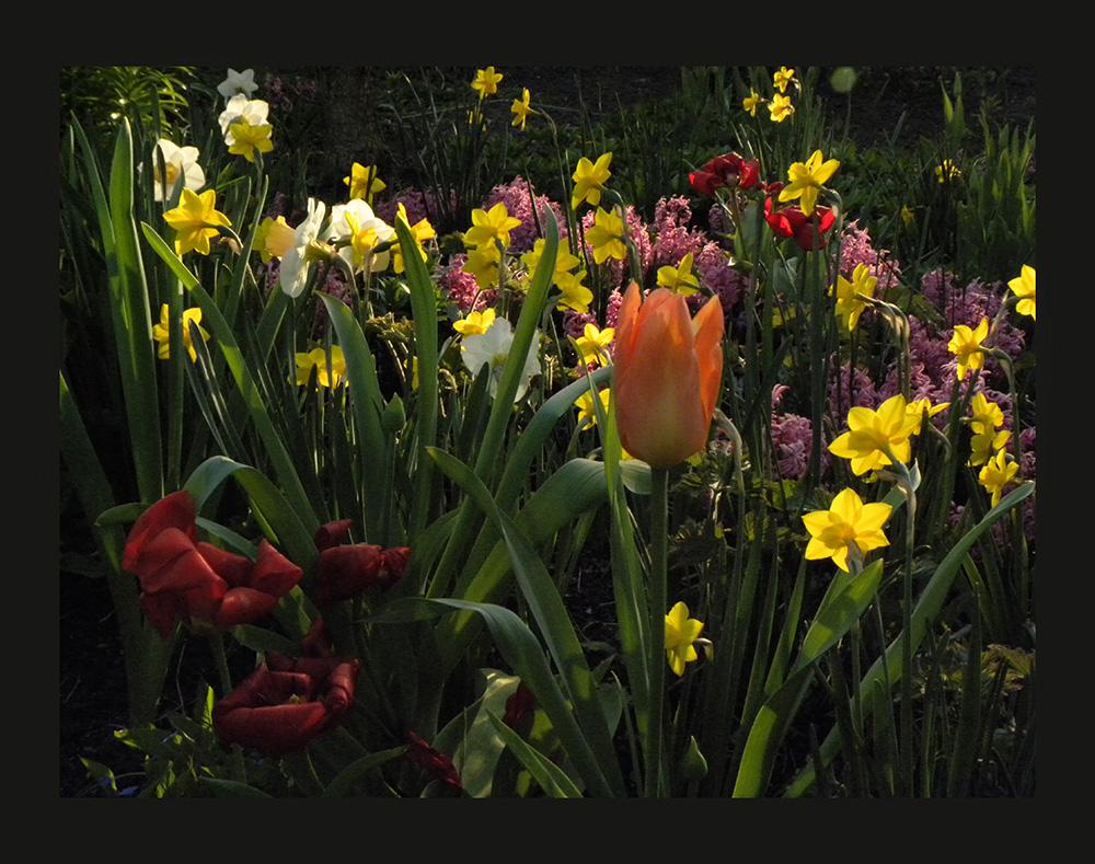 So schön ist der Frühling 2