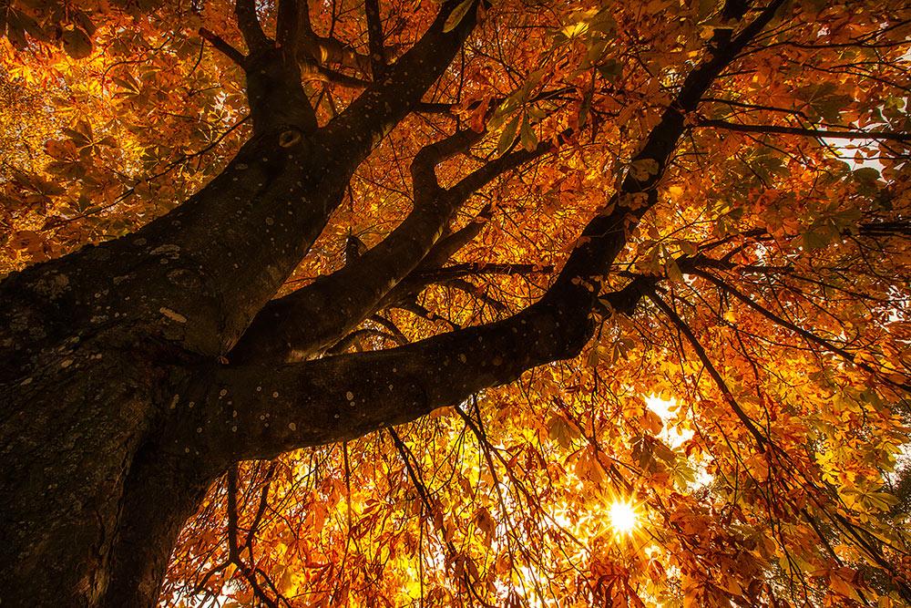 So schön kann der Herbst sein!