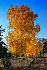 so schön kann nur der Herbst