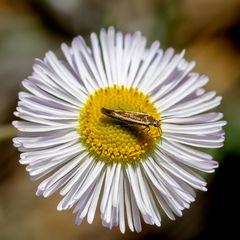 sonstige Insekten