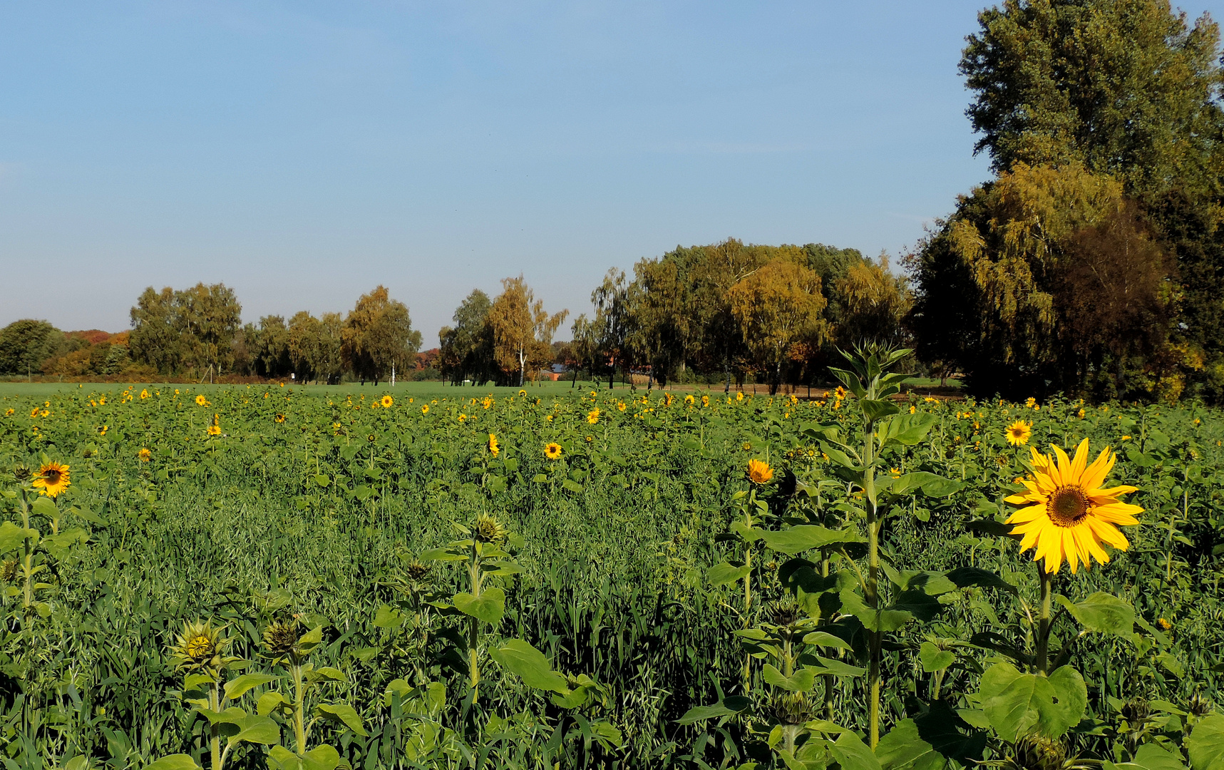 #...So sieht der Herbst aus........#