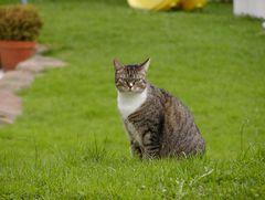 So sieht eine zufriedene Katze aus.