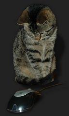 so so,  eine Maus ist das! ...